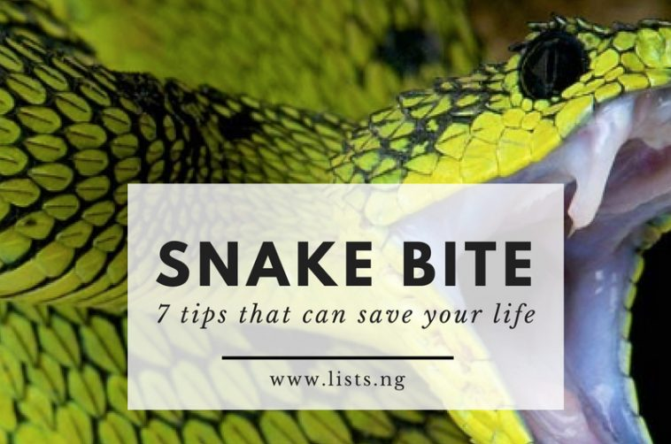 remedy for Snake bites